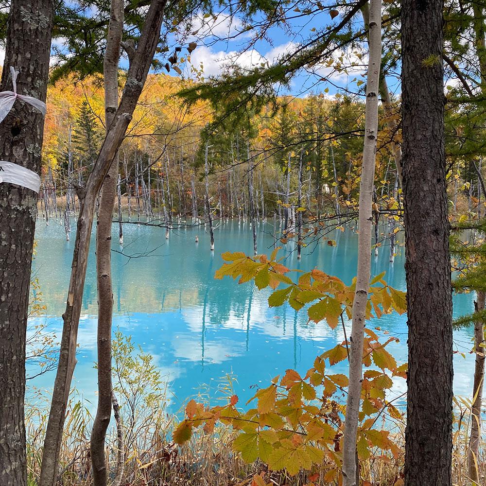 青い池ふたたび