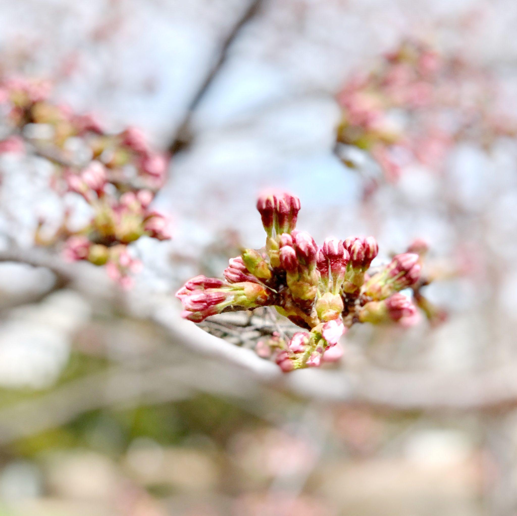 春はいいね、っていうひとりごと